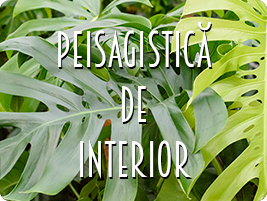 peisagistica de interior