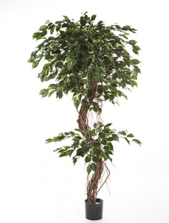 Planta artificiala de interior ficus corkscrew exotica 180 for Ficus planta interior